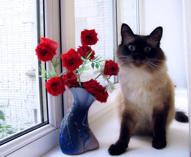 Открытка кошек с днем рождения