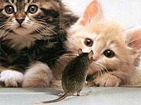 Кошке снится мышка