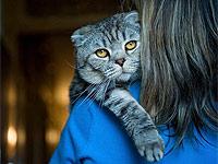 Десять вещей, которые должен знать каждый владелец кошки