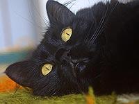 Как сделать кошке промывание желудка в домашних условиях
