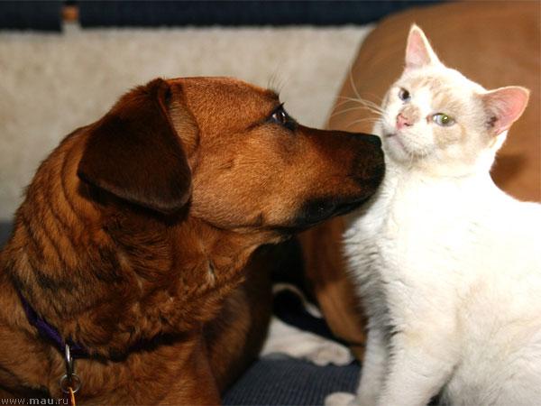 Кот Боб и пёс Бобби – история дружбы, у которой нет конца