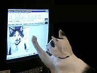 Компьютерная игра для кошек