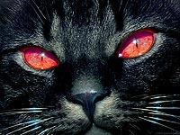 Кормление кастрированных котов • Правильное питание