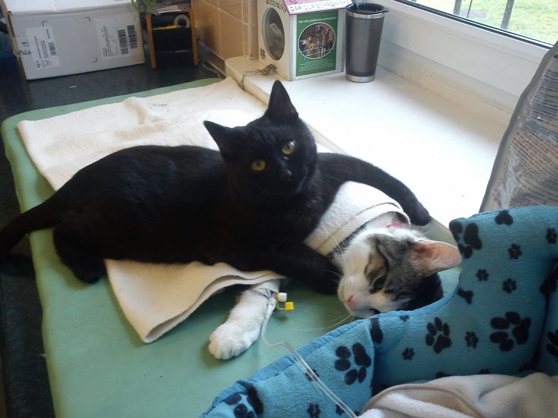 Радеменес - кот-медбрат из польского приюта для животных
