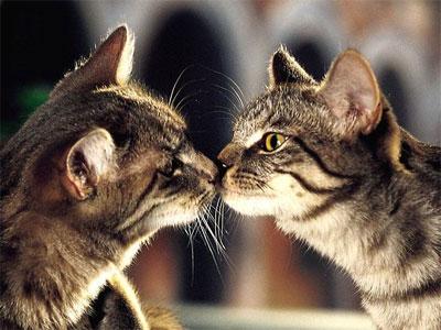 Пять типов поведения кошек