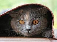 Домашние обязанности кота